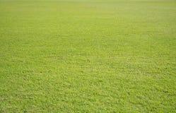 Greensward field background Stock Photo