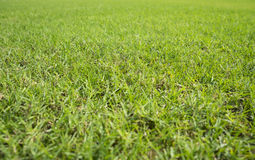 Greensward field background Royalty Free Stock Images