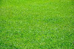 Greensward Stock Photo