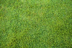 Greensward. Surface layer of ground containing a mat of grass and grass roots Stock Photography