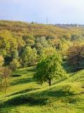 Greentree im Hügel vertikal Stockfotografie