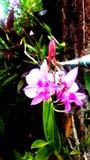 Greentrik-Orchidee stockbilder