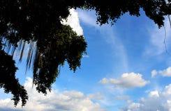GreenVine的美好的暗色在许多的在蓝天背景的白色云彩墙纸或自然框架的 免版税库存照片