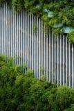 Greenwall и шпалера Стоковое фото RF