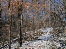 Greenway в зиме Стоковые Фотографии RF