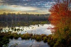 Greenway-Sumpf Lizenzfreies Stockfoto