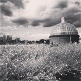 Greenwich & Canary Wharf Imagem de Stock Royalty Free