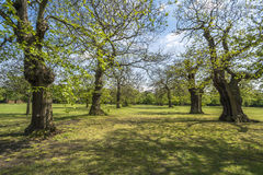 Greenwich park Stock Photography