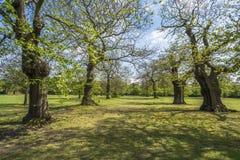 Greenwich parkerar Arkivbild