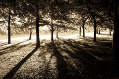 Greenwich sepia trees Royalty Free Stock Images