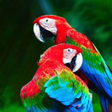 Greenwinged ара Стоковые Изображения