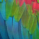 Greenwinged Macaw feathers Stock Photos