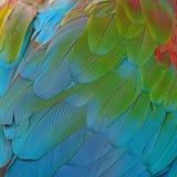 Greenwinged Macaw feathers. Beautiful bird feathers background of Greenwinged Macaw feathers pattern Royalty Free Stock Photos