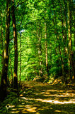 greenwood Royalty-vrije Stock Afbeelding