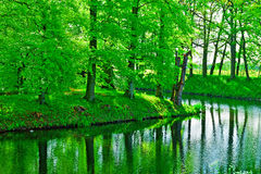 Greenwood. On the Canal Bank in the Netherlands stock photo