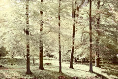 Greenwood. On the Canal Bank in the Netherlands, Vintage Style Toned Picture stock photography