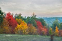 Greenwood in fall season. Varicolored trees of greenwood in fall season royalty free stock photos