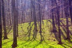 Greenwood wiosny sceneria zdjęcie stock