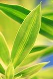 greeny Стоковое Изображение RF