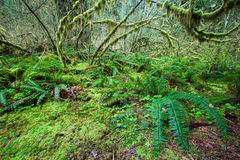 Greeny forest and frern Royalty Free Stock Images