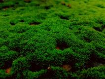 greeny Stock Photo