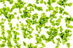 Greeny koktajli/lów składniki Sprawności fizycznej smoothie Celeriac na białej tło odgórnego widoku przestrzeni dla teksta Obrazy Stock