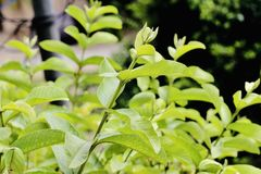 Greeny leaves in a garden stock photos