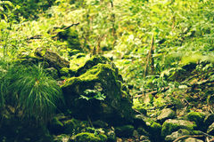 Greeny stones. In the forest Stock Photography