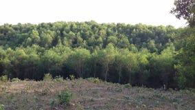 Greeny wzgórze Fotografia Royalty Free