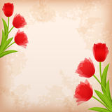 Greeting �ard with tulip. Stock Image