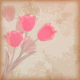 Greeting �ard with tulip. Royalty Free Stock Photography