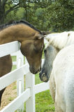 Greeting. Two horses lower their heads and nuzzle each other in greeting Stock Photos