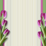 Greeting background with tulips Stock Photos