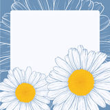 Greeting card. Vector illustration with daisies for greeting card Stock Image