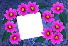 Greeting card. Textured greetingcard with pink cosmea flower and a blank card Stock Image