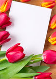 Greeting card. Blank greeting card with tulips around Stock Photos