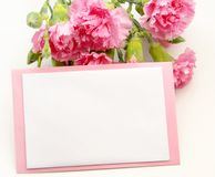 Greeting card. With pink carnations on white background Royalty Free Stock Photography