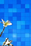 Greeting card. Flowers on the blue sky. Greeting card background ideal for posting graphic info or images Royalty Free Stock Images
