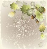Greeting card with acorns. Illustration  acorns. Stock Photo