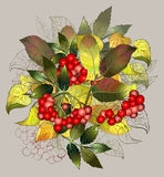 Greeting card with autumn berries and leaves. Autumn illustratio Stock Images