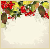 Greeting card with autumn berries and leaves.  Royalty Free Stock Photos