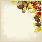 Greeting card with autumn berries and leaves. Stock Image