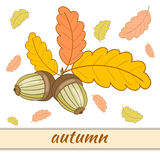 Greeting Card Autumn-3-01. Greeting card with colorful oak leaves and acorns.Beautiful vector illustration on the theme of autumn.The  image on a white Stock Images