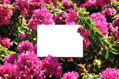 Greeting card on a background of beautiful flowers.  Stock Images