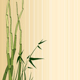 Greeting card with bamboo. Vector illustration of bamboo on beige background Royalty Free Stock Photo