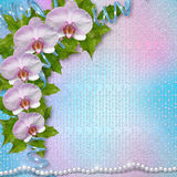 Greeting card with beautiful branch orchid Stock Image