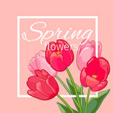 Greeting card with Blooming Tulip Flowers. Vector illustration Stock Photography