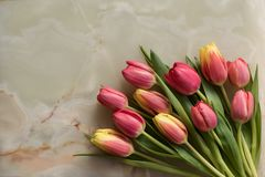 Marble background with tulips. Greeting card, bouquet of beautiful flowers, spring tulips on a marble background stock image