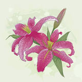 Greeting card with bouquet of pink lilies Royalty Free Stock Image