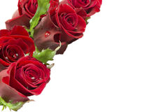Greeting card with a bouquet of roses Stock Images